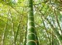 ¿Bambú o madera?