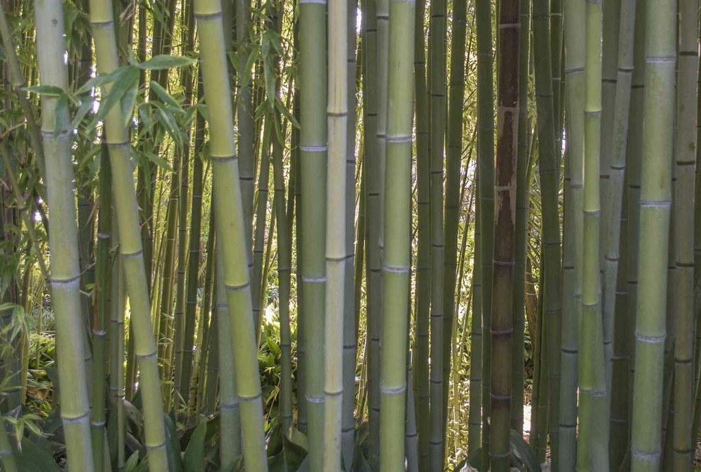 Plantemos bambú y cosecharemos casas